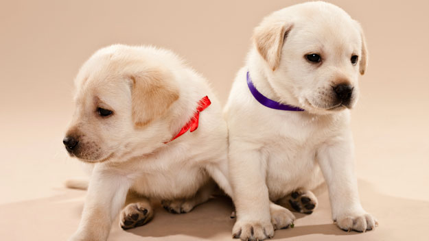 Puppy love: choosing the perfect pet
